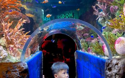 """สวัสดีปีใหม่ไทย พาชม """"Penguin Ice Playground Challenge"""" ที่ SEA LIFE Bangkok Ocean World"""