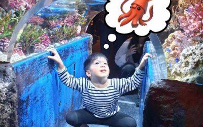 """""""อยากได้ตุ๊กตาปลาหมึก"""""""